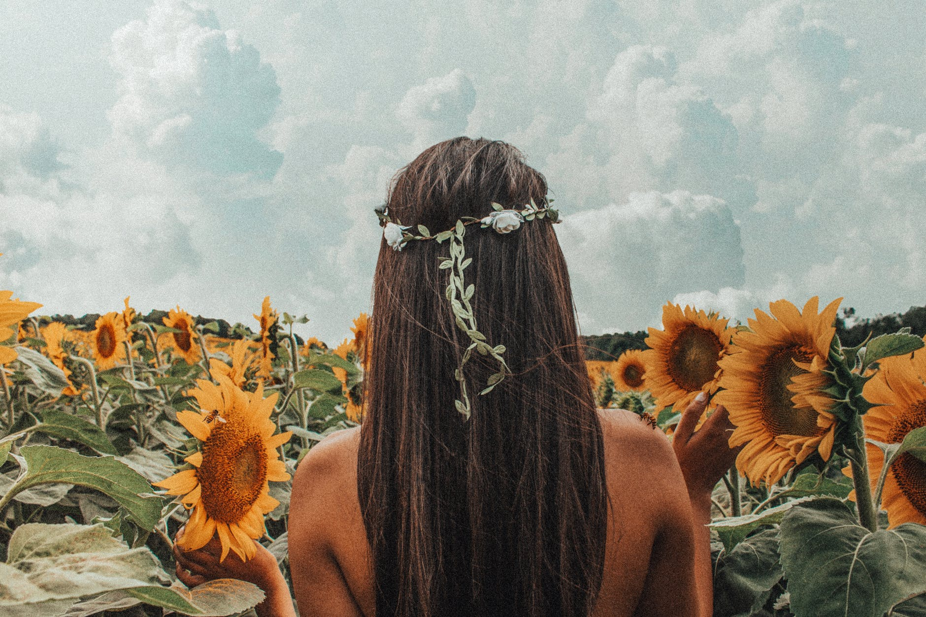 Woman stands in a sunflower field